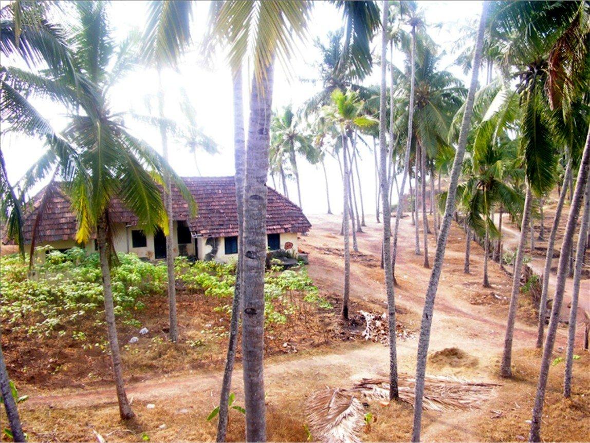 les cocotiers